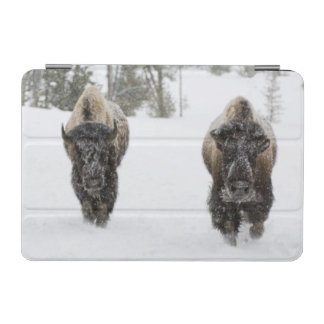 USA, WY, Yellowstone NP, American Bison (Bison iPad Mini Cover