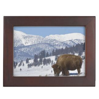 USA, WY, Yellowstone NP, American Bison Bison Keepsake Box