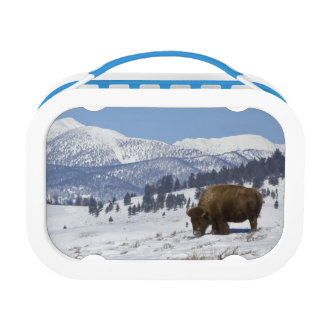 USA, WY, Yellowstone NP, American Bison Bison Lunch Box