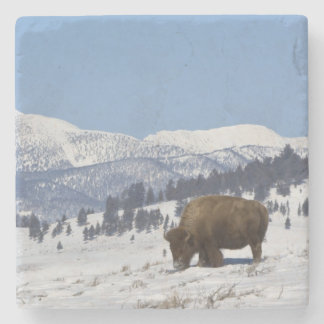 USA, WY, Yellowstone NP, American Bison Bison Stone Coaster