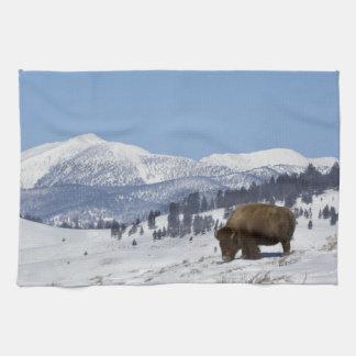 USA, WY, Yellowstone NP, American Bison Bison Tea Towel