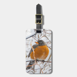 USA, Wyoming, American Robin roosting on willow Luggage Tag