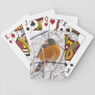 USA, Wyoming, American Robin roosting on willow Playing Cards