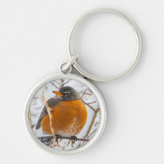 USA, Wyoming, American Robin roosting on willow Silver-Colored Round Key Ring