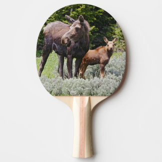 USA, Wyoming, Bighorn Mountains, moose Alces Ping Pong Paddle