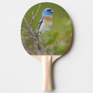USA, Wyoming, Bighorn National Recreation Ping Pong Paddle