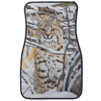 USA, Wyoming, Bobcat sitting in snow-covered Car Mat