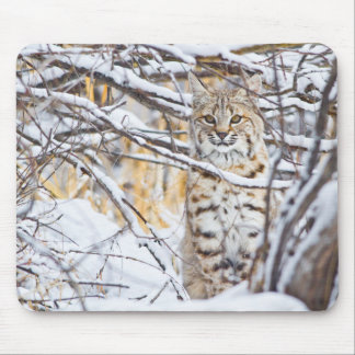 USA, Wyoming, Bobcat sitting in snow-covered Mouse Pad