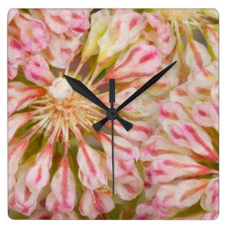 USA, Wyoming, Buckwheat wildflower close-up Square Wall Clock
