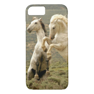 USA, Wyoming, Carbon County. Two wild iPhone 7 Case