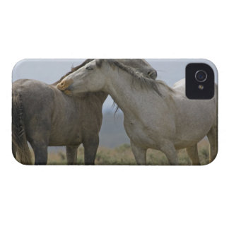USA, Wyoming, Carbon County. Wild horses 2 iPhone 4 Case