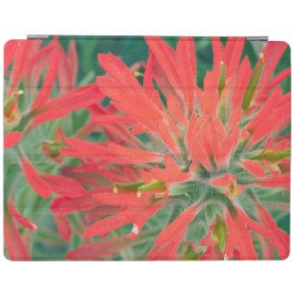 USA, Wyoming, Close-up of Desert Paintbrush iPad Cover