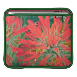 USA, Wyoming, Close-up of Desert Paintbrush iPad Sleeve