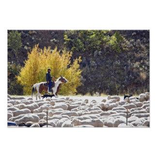 USA, Wyoming, Evanston. Cowboy herding sheep. Photo