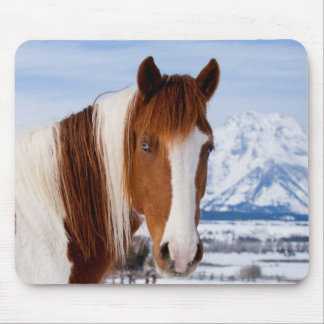 USA, Wyoming, Grand Teton National Park 3 Mouse Pad