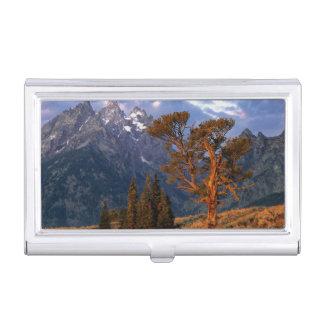 USA, Wyoming, Grand Teton NP. A lone cedar Business Card Holder