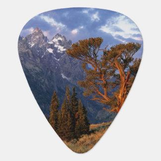USA Wyoming Grand Teton NP A lone cedar Guitar Pick