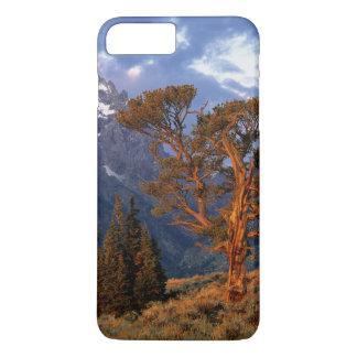 USA, Wyoming, Grand Teton NP. A lone cedar iPhone 8 Plus/7 Plus Case