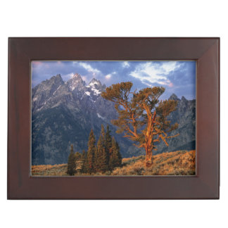 USA, Wyoming, Grand Teton NP. A lone cedar Keepsake Box