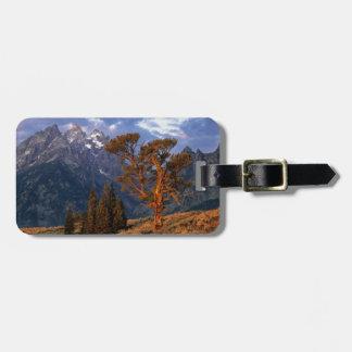 USA, Wyoming, Grand Teton NP. A lone cedar Luggage Tag