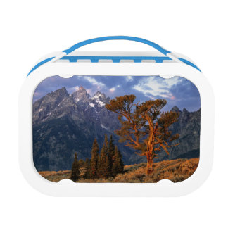 USA, Wyoming, Grand Teton NP. A lone cedar Lunch Box