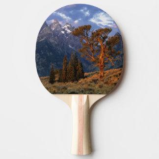 USA, Wyoming, Grand Teton NP. A lone cedar Ping Pong Paddle