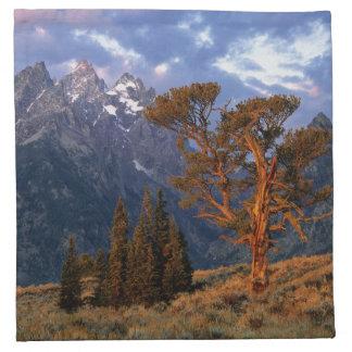 USA, Wyoming, Grand Teton NP. A lone cedar Printed Napkin