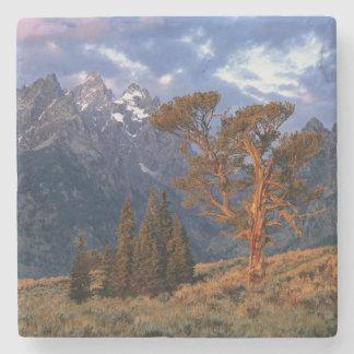USA, Wyoming, Grand Teton NP. A lone cedar Stone Coaster