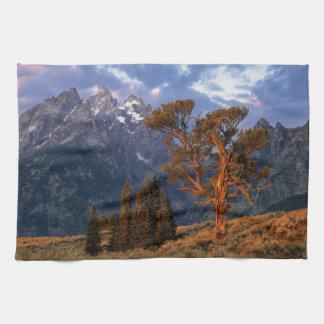 USA, Wyoming, Grand Teton NP. A lone cedar Tea Towel