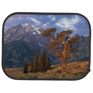 USA, Wyoming, Grand Teton NP. A lone cedar Floor Mat