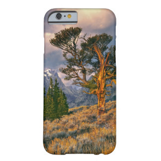 USA, Wyoming, Grand Teton NP. Sunrise greets a Barely There iPhone 6 Case
