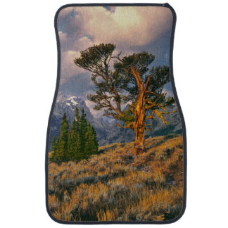 USA, Wyoming, Grand Teton NP. Sunrise greets a Car Mat