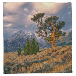 USA, Wyoming, Grand Teton NP. Sunrise greets a Cloth Napkin