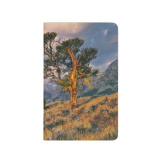 USA, Wyoming, Grand Teton NP. Sunrise greets a Journal