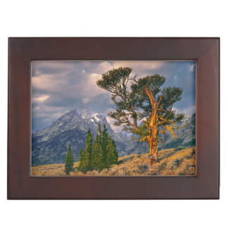 USA, Wyoming, Grand Teton NP. Sunrise greets a Keepsake Box