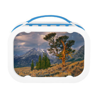 USA, Wyoming, Grand Teton NP. Sunrise greets a Lunch Box