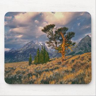 USA, Wyoming, Grand Teton NP. Sunrise greets a Mouse Pad
