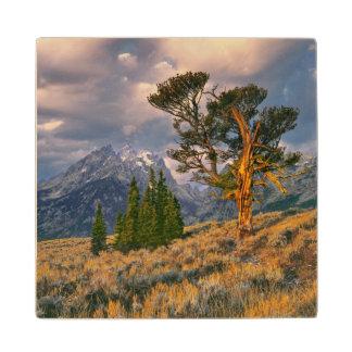 USA, Wyoming, Grand Teton NP. Sunrise greets a Wood Coaster