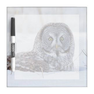 USA, Wyoming, Great Gray Owl sitting in snow Dry Erase Board