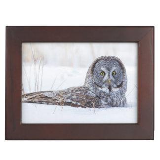 USA, Wyoming, Great Gray Owl sitting in snow Keepsake Box