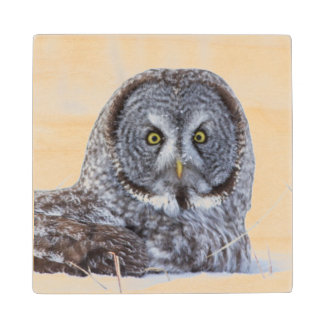 USA, Wyoming, Great Gray Owl sitting in snow Wood Coaster