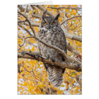 USA, Wyoming, Great Horned Owl roosting Card