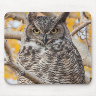 USA, Wyoming, Great Horned Owl roosting Mouse Mat