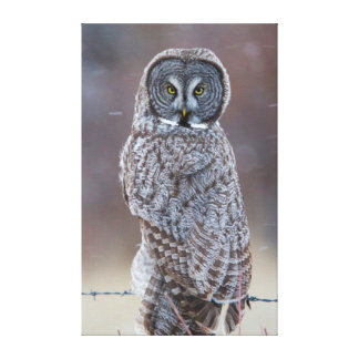 USA, Wyoming, Lincoln County, Great Gray Owl Canvas Print