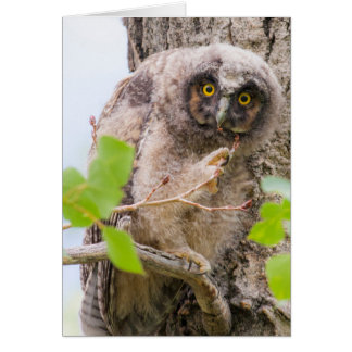 USA, Wyoming, Long-eared Owl chick Card