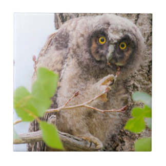 USA, Wyoming, Long-eared Owl chick Small Square Tile