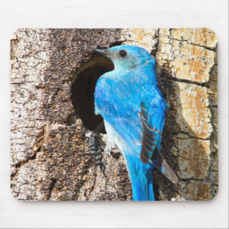 USA, Wyoming, Male Mountain Bluebird Mouse Mat