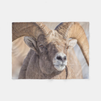 USA, Wyoming, National Elk Refuge, Bighorn Sheep Fleece Blanket