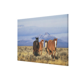 USA, Wyoming, near Cody Group of horses, Heart Canvas Print