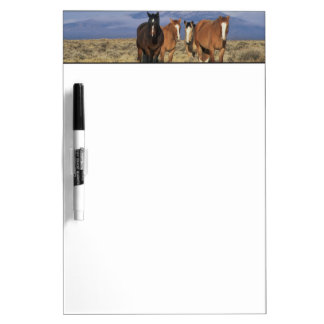 USA, Wyoming, near Cody Group of horses, Heart Dry Erase Board